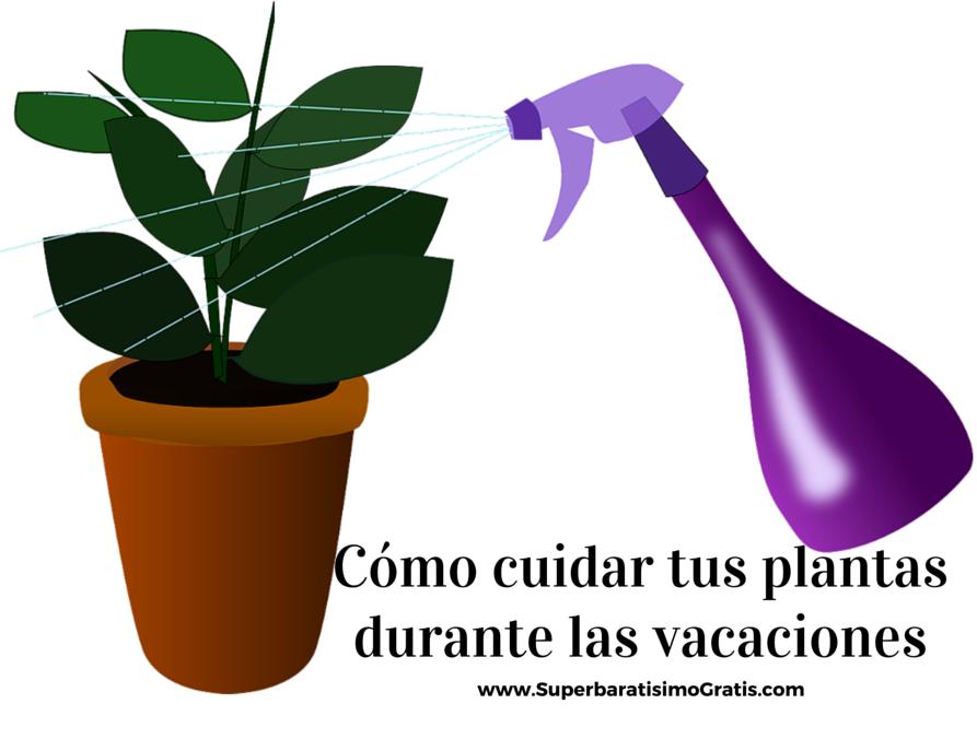 como cuidar de tus plantas durante las vacaciones